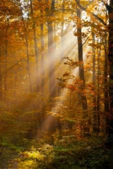autumnforestiStock_000015040283XSmall