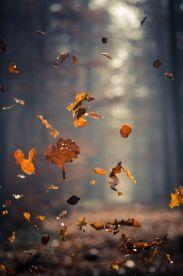 86378e3310293fcc925b5362baa288d6--goldfish-autumn-fall